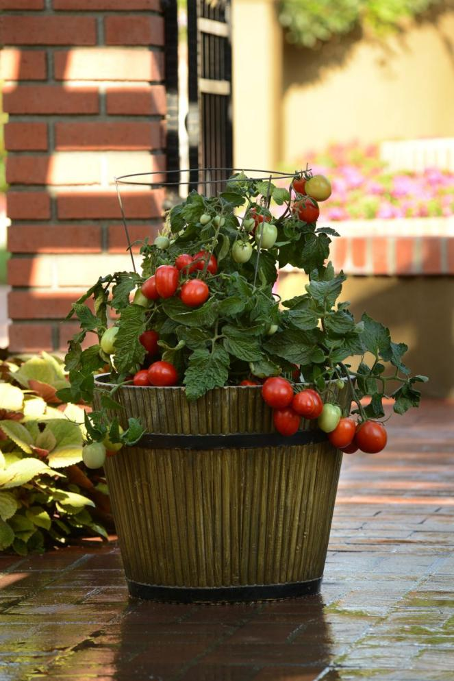 container tomatoes
