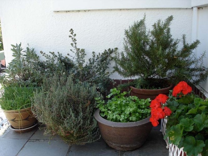 herb-container-mediterranean